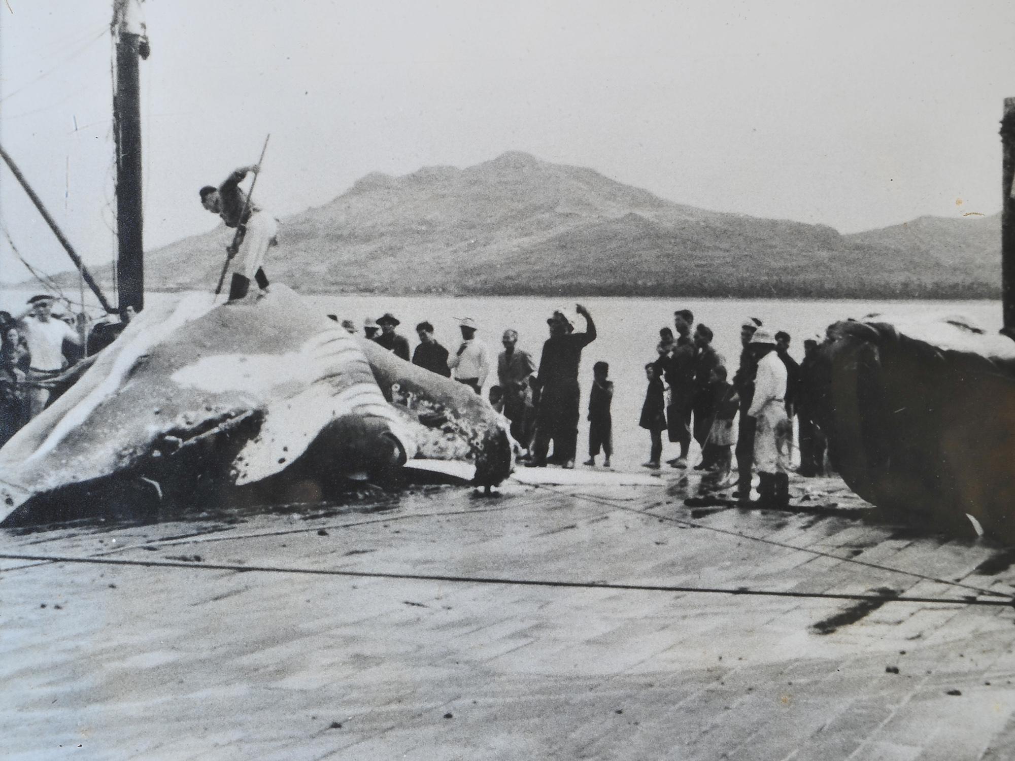 『クジラ漁』の一大基地だった津波古・馬天港 / 旧佐敷町津波古(その2)|おきなわアーカイブ