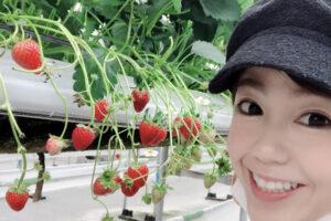 嘉数ゆりオススメ!沖縄で美味しいイチゴ狩りができる!「美らイチゴ 南城ハウス」|南城市玉城垣花|嘉数ゆり Yuri's life
